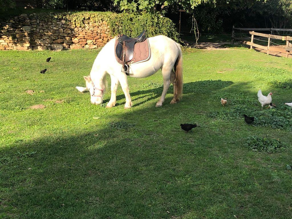La ferme du Dolmen, cheval