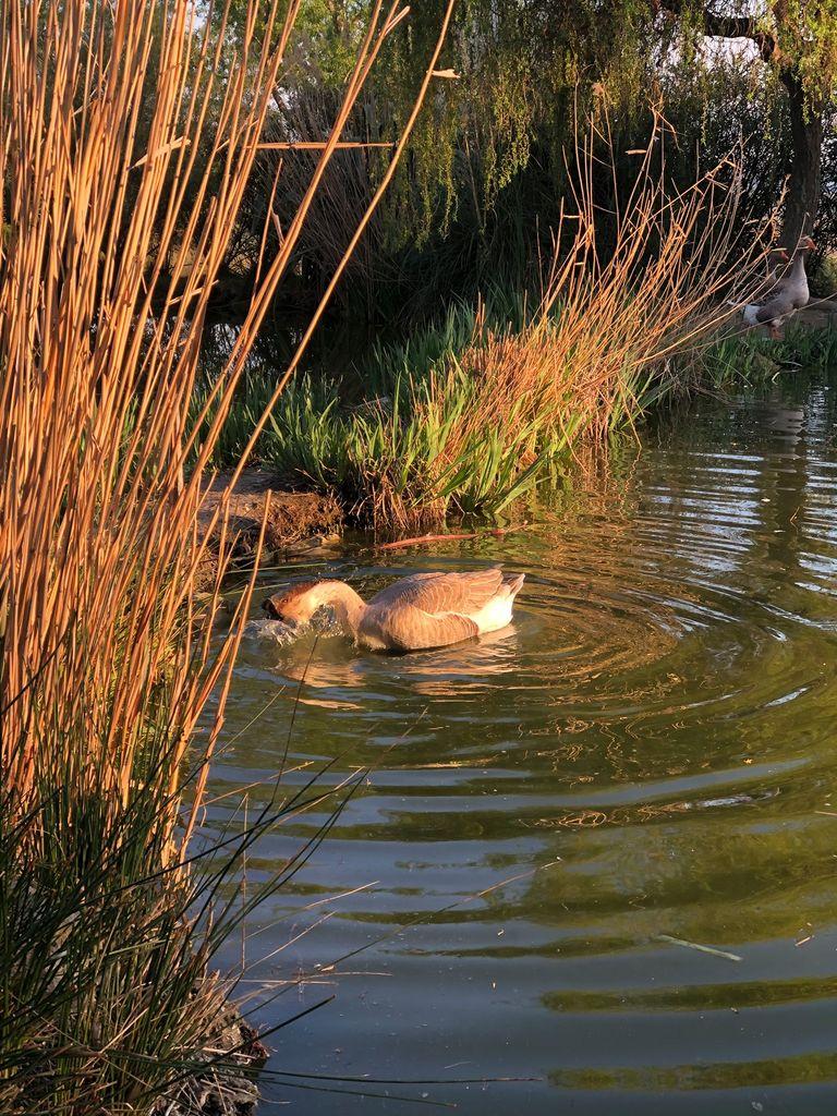 La ferme du Dolmen, l'étang et ses oiseaux