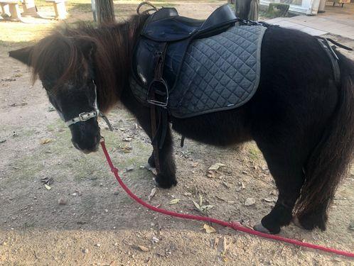 La ferme du Dolmen, les poneys