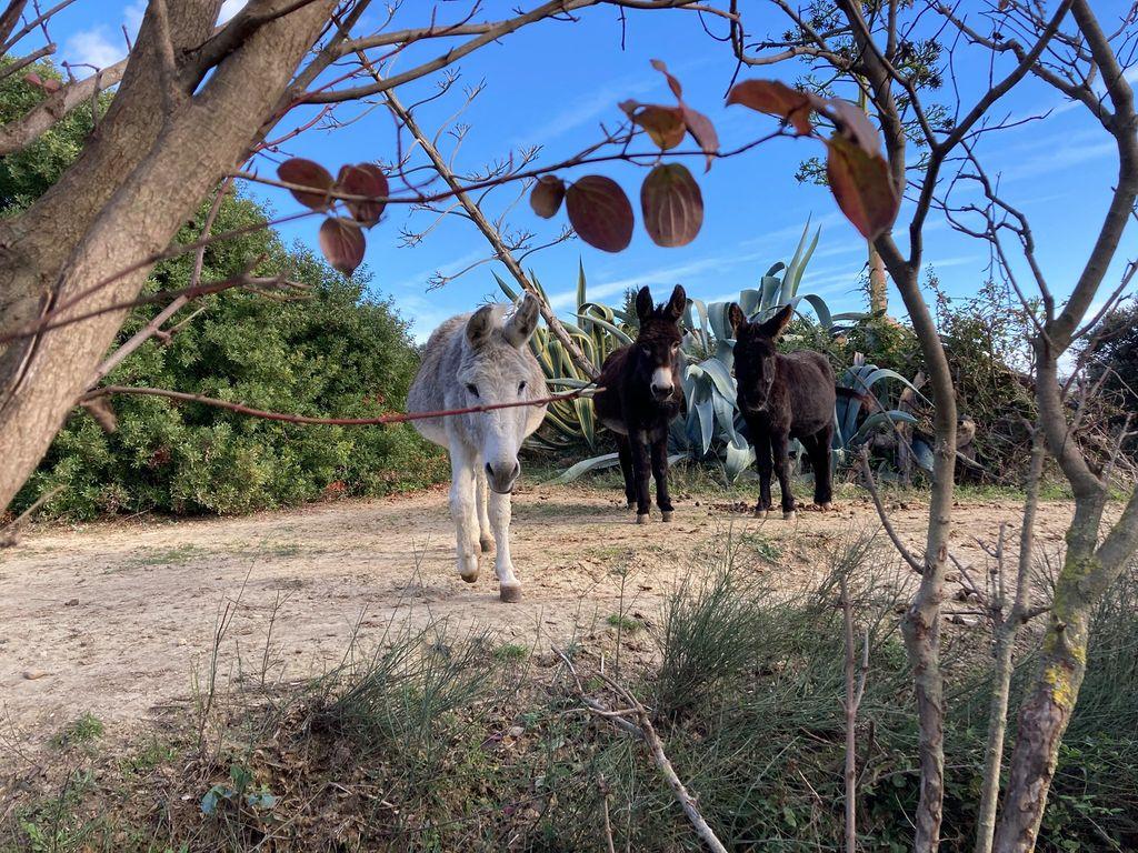 La ferme du Dolmen, les ânes de saint-andré